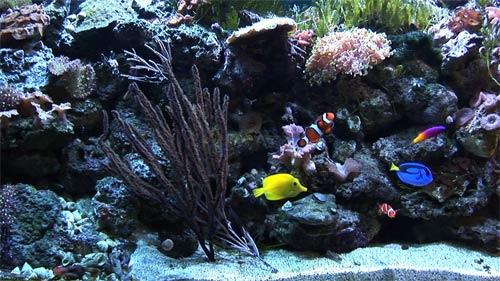 Ambient Water Video Aquarium Dvd Is More Than Just A Fake Aquarium Tv