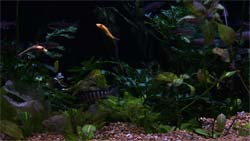 Saltwater fish in a fish tank DVD