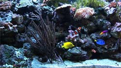 Saltwater Video Aquarium (wide shot)