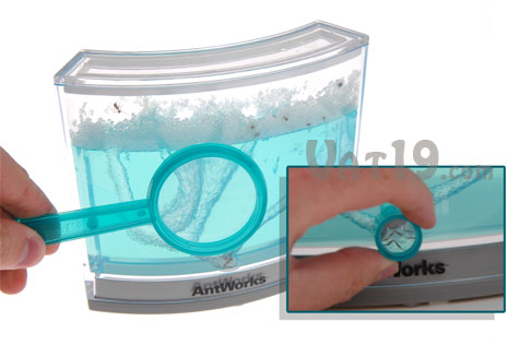 AntWorks Ant Farm magnifying glass and zoom lens