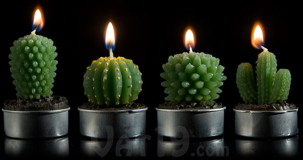 Each set of Cactus Tea Light Candles includes four styles of cactus plant.