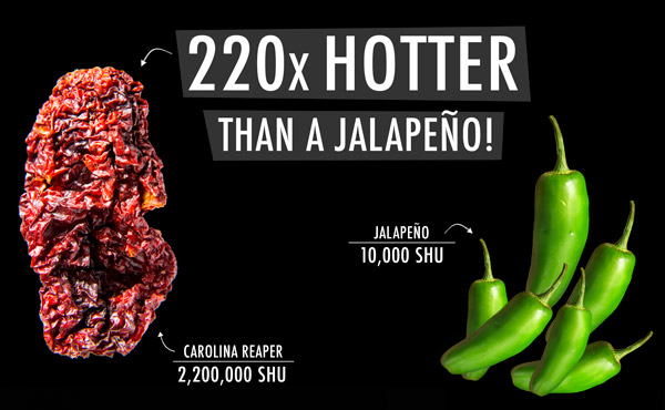 220x hotter than a jalapeno