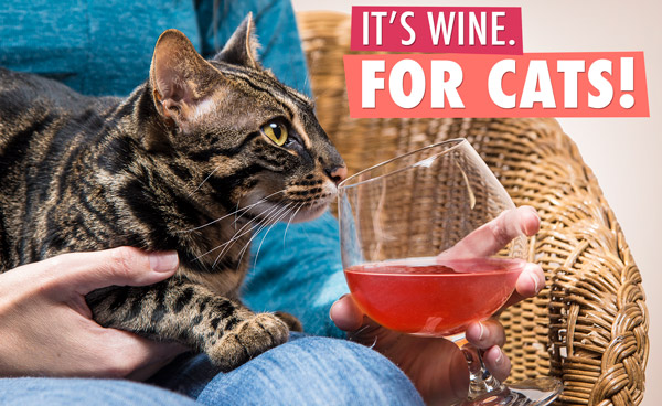 It's wine. For cats!