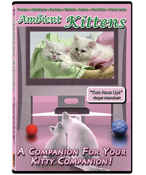 Ambient Kittens DVD