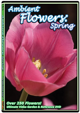 Ambient Flowers: Spring DVD