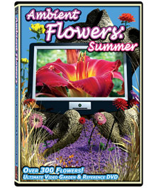 Ambient Flowers: Summer DVD