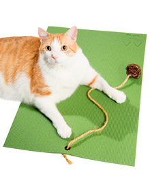 Yoga Mat for Cats