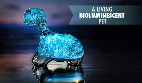 A living bioluminescent pet