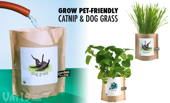 Gardens in a Bag Grow your own Catnip and Dog Grass