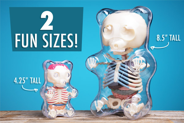 The Gummy Bear Anatomy Puzzle is available in two sizes.