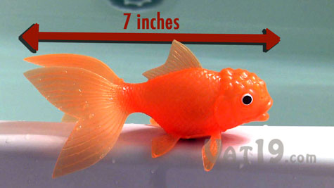 koi toy: water-activated, light-up, color-changing fish toy., Reel Combo