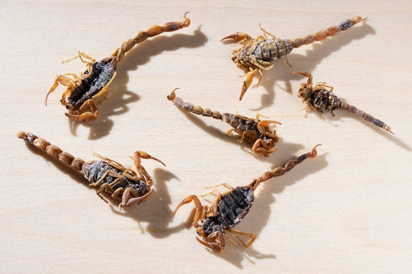 Package of six scorpions
