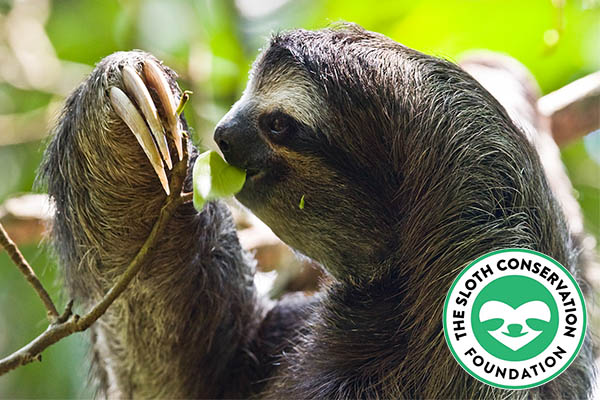Each kit benefits The Sloth Conservation Foundation.
