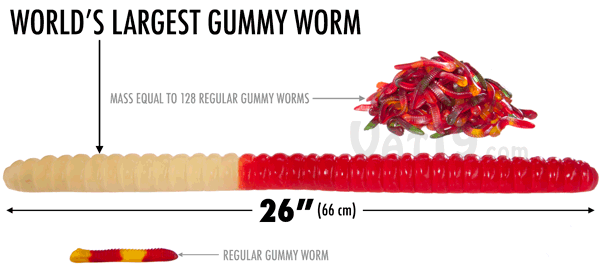 The World's Largest Gummy Worm is approximately 26